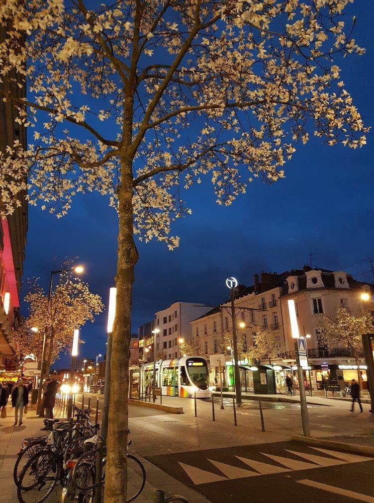 夜空の群青色に映える白い木蓮の花。トラムの電停のTが良く見える。歩道の街燈のデザインも洒落ている。