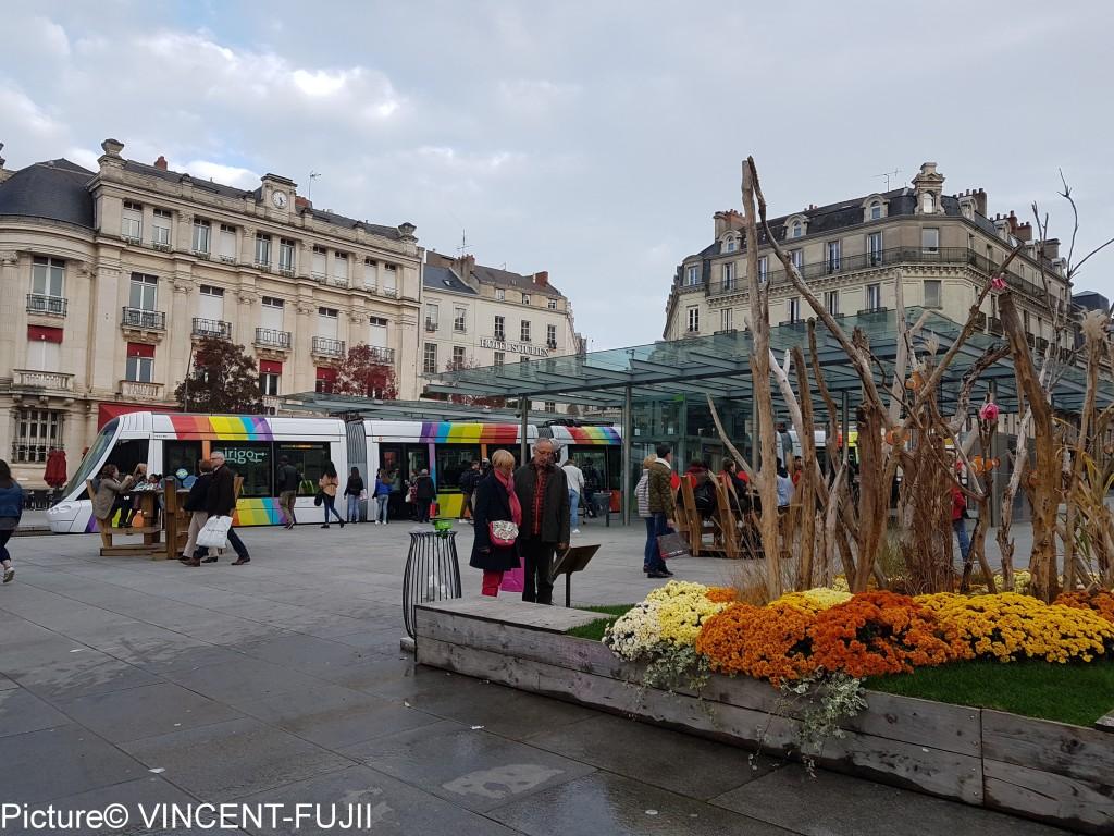 中心広場は、9月から秋の装いで、菊の花。